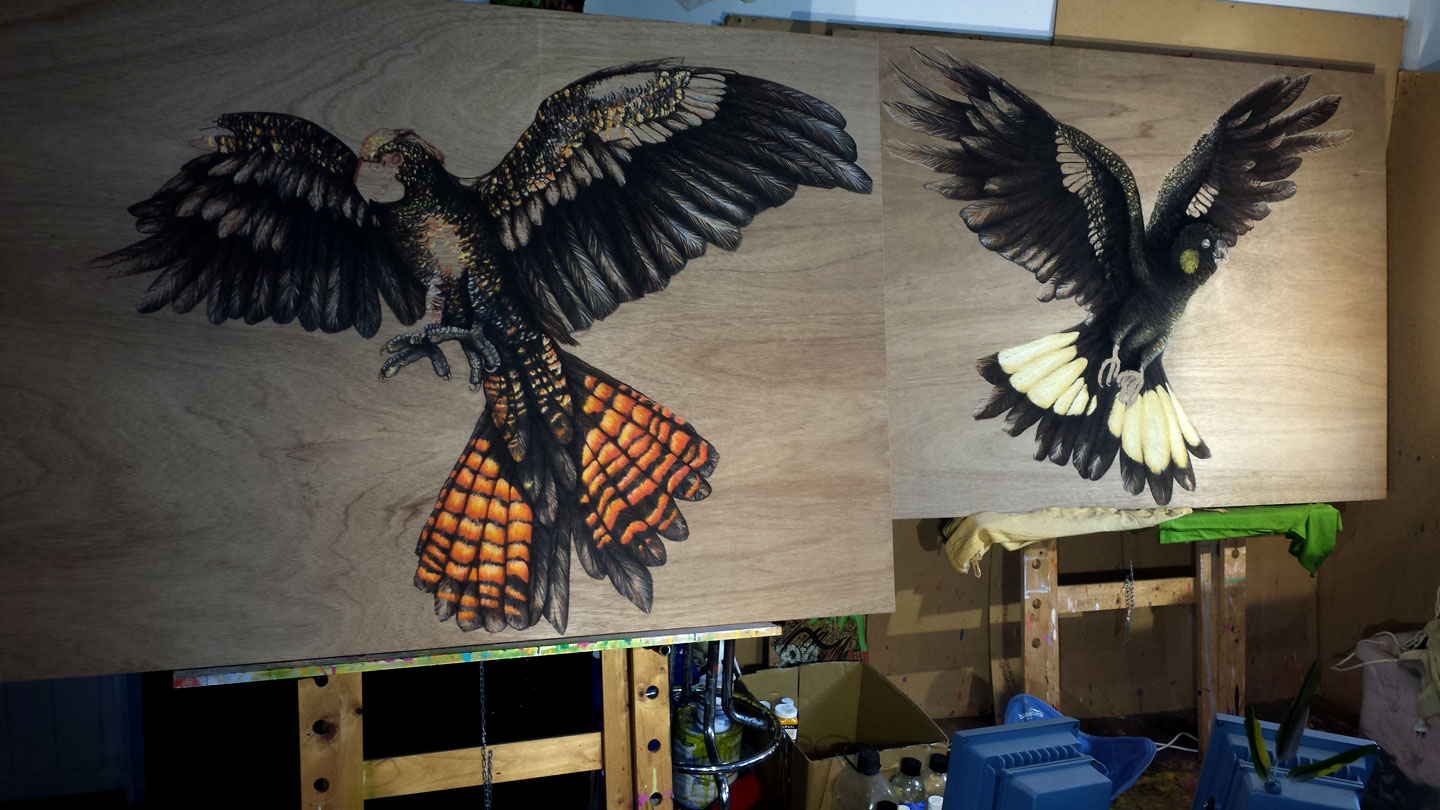 Making Progress on Black Cockatoo pair in the Solitude Art Gallery Studio