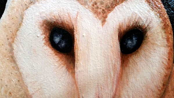 SHIA - Detail of the Barn Owl Face Artwork created by Artist Darren Trebilco can be viewed at the Sunshine Coast Solitude Art Gallery/Open Studio Glenview QLD