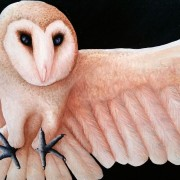 SHIA - Detail of Barn Owl Full Body and wing span Artwork created by Artist Darren Trebilco can be viewed at the Sunshine Coast Solitude Art Gallery/Open Studio Glenview QLD