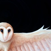 SHIA - Detail of Barn Owl head and wing span Artwork created by Artist Darren Trebilco can be viewed at the Sunshine Coast Solitude Art Gallery/Open Studio Glenview QLD