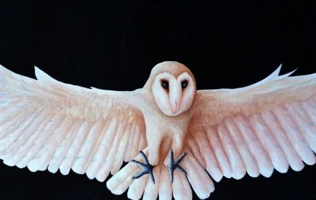 SHIA - Barn Owl