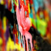 Cherry Blossom - Darren Trebilco up close of flower